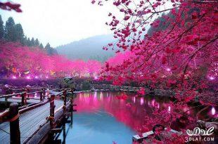 بالصور صور جميله جدا جدا , صور جميله ومميزه 6091 10 310x205