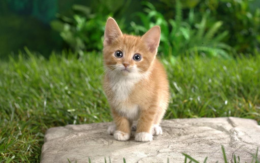 بالصور خلفيات قطط , قطط كيوت جميله 6105 10