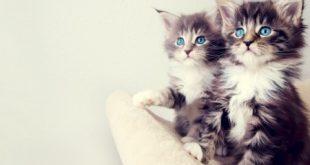 صور خلفيات قطط , قطط كيوت جميله