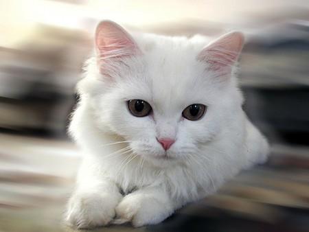 بالصور خلفيات قطط , قطط كيوت جميله 6105 2