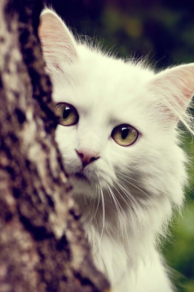 بالصور خلفيات قطط , قطط كيوت جميله 6105 3