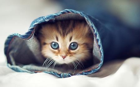 بالصور خلفيات قطط , قطط كيوت جميله 6105 4