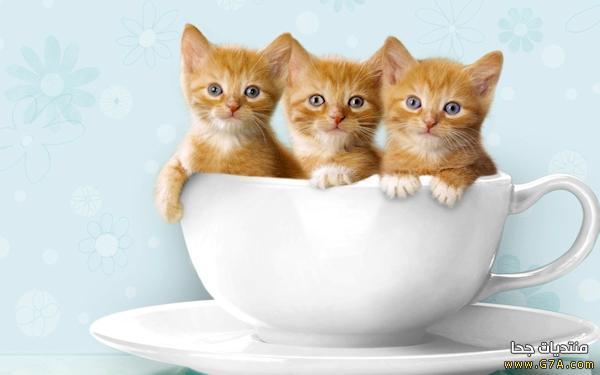 بالصور خلفيات قطط , قطط كيوت جميله 6105 5
