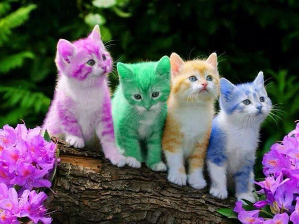 بالصور خلفيات قطط , قطط كيوت جميله 6105 6