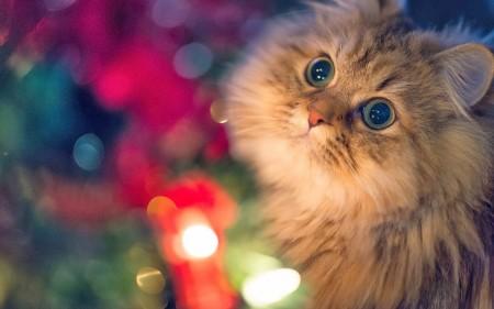 بالصور خلفيات قطط , قطط كيوت جميله 6105 8