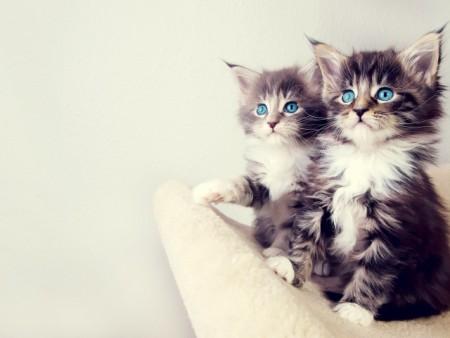 بالصور خلفيات قطط , قطط كيوت جميله 6105