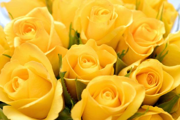 بالصور صور ورد جميل , ارق و اروع انواع الورود 6206 7