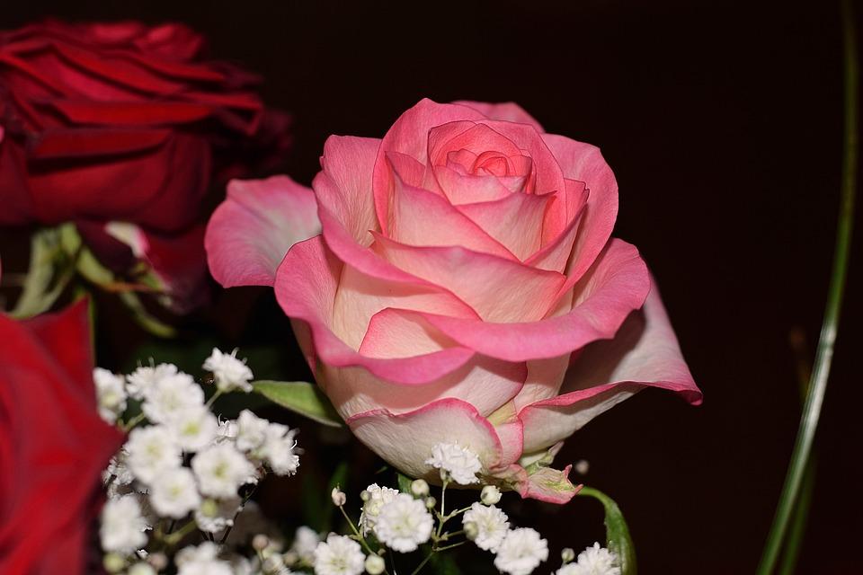 بالصور صور ورد جميل , ارق و اروع انواع الورود 6206 9