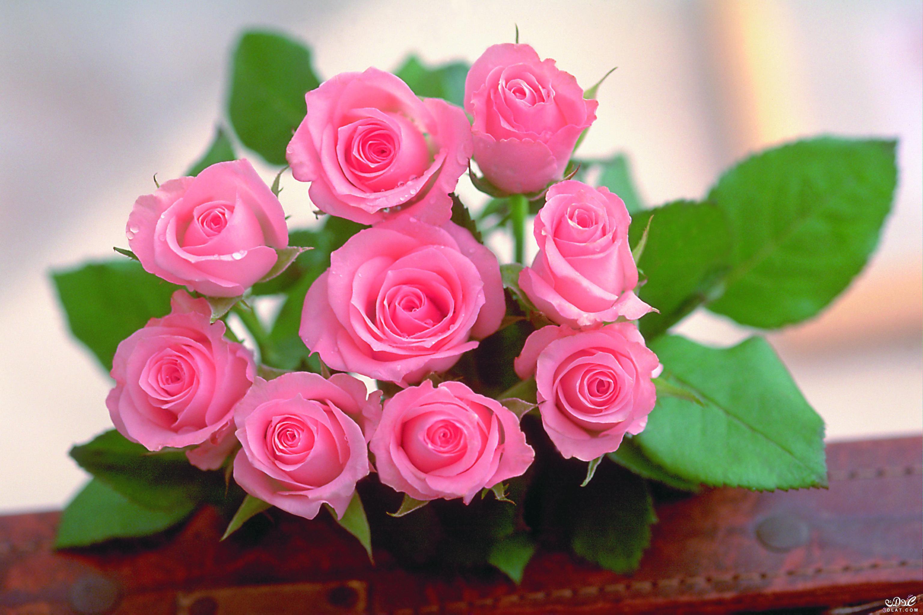 صور اجمل صور الورد , ازهار و ورود رائعه