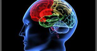 صور علاج ضمور المخ بالطب النبوي , ماهي اعراض الاصابة بضمور المخ