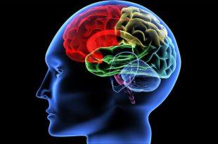 بالصور علاج ضمور المخ بالطب النبوي , ماهي اعراض الاصابة بضمور المخ 12466 3 310x205