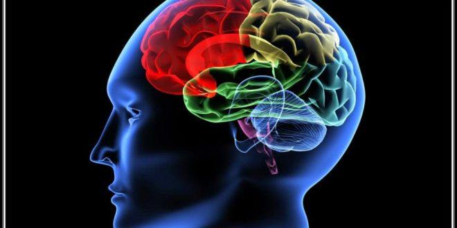 صورة علاج ضمور المخ بالطب النبوي , ماهي اعراض الاصابة بضمور المخ