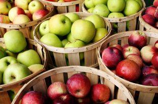 صورة موضوع عن التفاح , ماهي فوائد ثمرة التفاح