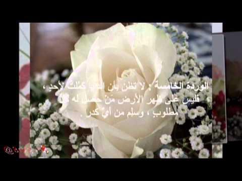 صورة كلمات عن الورد الابيض , ما اجمل الورود