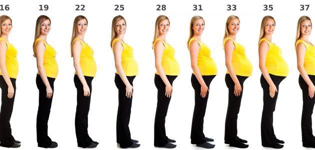 صورة مراحل الحمل بالاسابيع والاشهر , وقت تكون الجنين