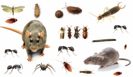 صورة شركة مكافحة حشرات براس تنورة , الحشرات الزاحفه و الطائرة