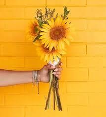 صور لون اصفر خليط بين لونين الاحمر و الاخضر بنات كول