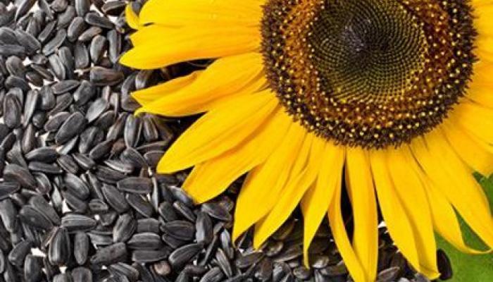 صور حب دوار الشمس , تحسين صحة البشرة