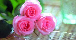 صورة صور احلى ورد , بطاقات زهور رقيقه
