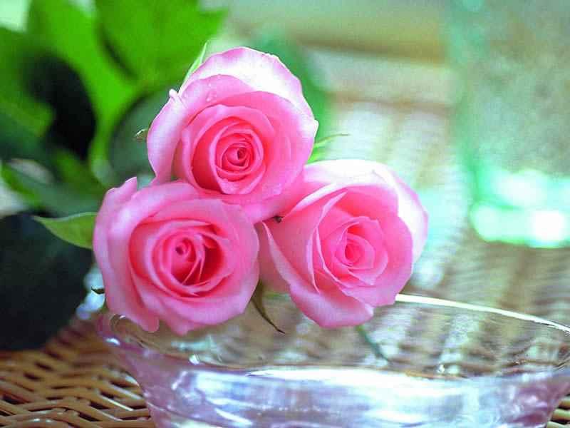 صور صور احلى ورد , بطاقات زهور رقيقه