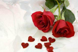 صورة صور ورد صور ورد , وافضل الباقات من الورود
