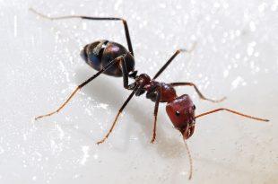 صورة معلومات عن النمل, معلومات عن عالم النمل