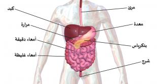 صورة جسم الانسان بالصور , يوجد صوركثيرةلجسم الانسان