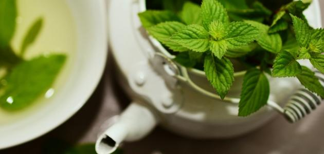 صورة عشب رائع له عدة فوائد تعرف عليها, فوائد شرب النعناع 11583 2
