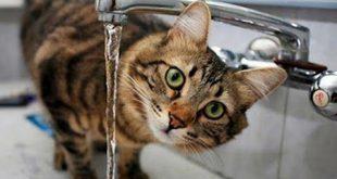 صورة سبحان الله هل تعرف هذه المعلومة , لماذا تخاف القطط من الماء