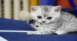 كيفية تربية القطط،اسهل طريقه للتعامل مع القطط في المنزل