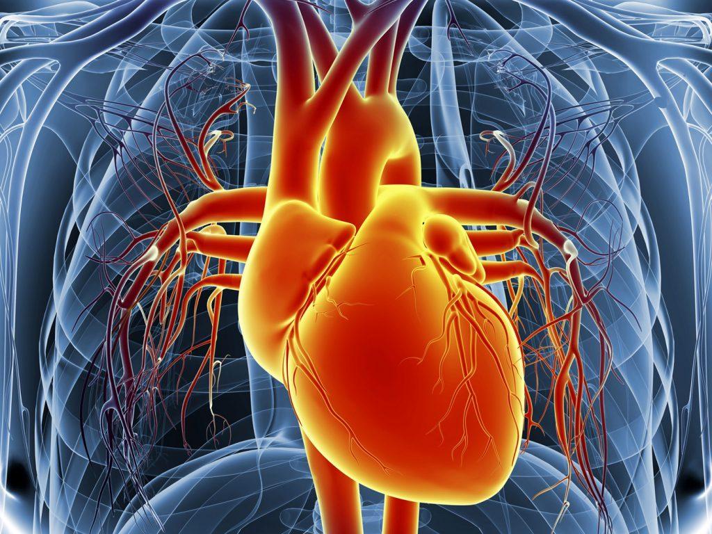 صورة العلاج هو الانتظام فى الادوية , علاج امراض القلب 12201