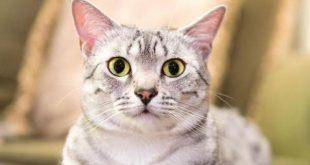 علاج الامساك عند القطط